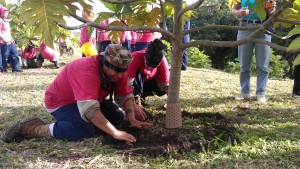 WCC women planting breadfruit trees.